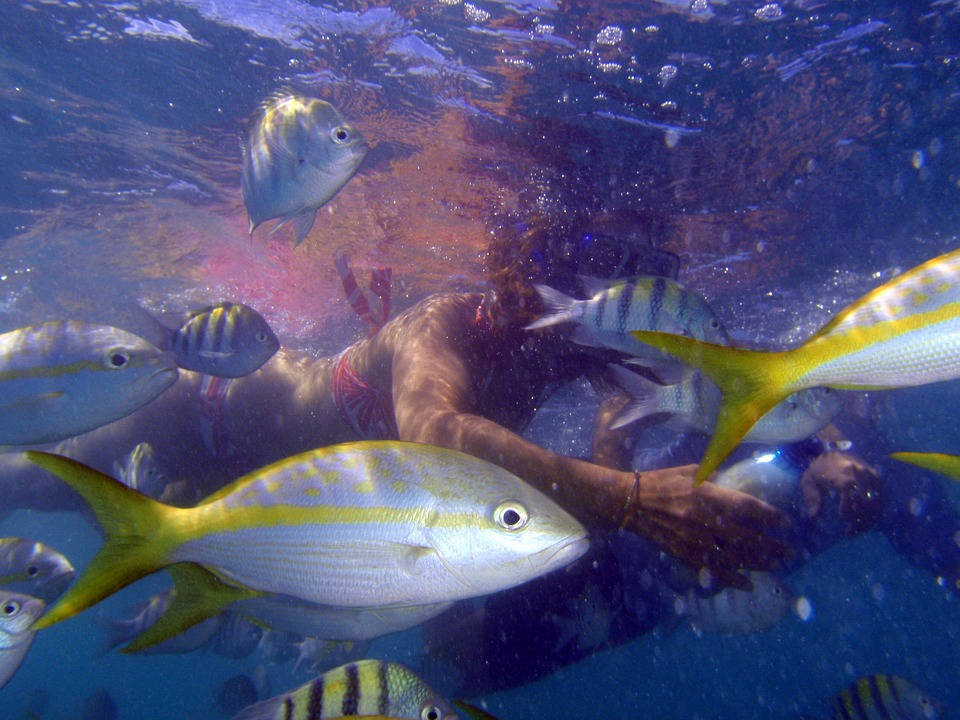 3 spots de plongée à explorer à Cuba